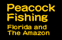 Peacock Fishing - Florida and The Amazon
